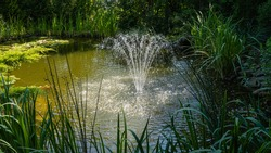 Magical garden pond with cascading fountain. Evergreens and aquatic plants plants on shore are reflected in water surface of pond. Atmosphere of relaxation, tranquility and happiness
