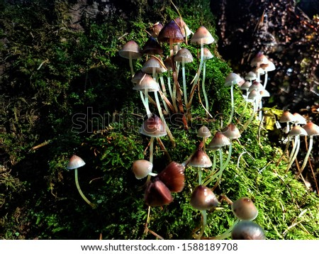 Magical green stump with mysterious mysterious mushrooms.