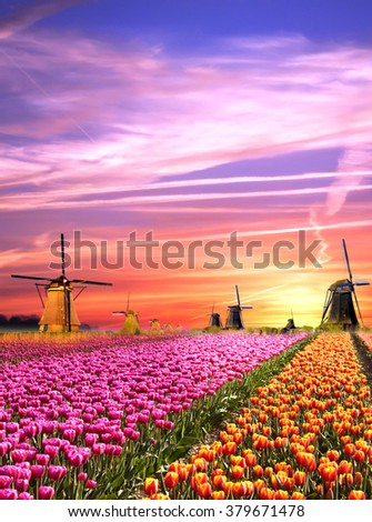 Magical landscapes with windmills and tulips at sunrise in the Netherlands