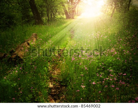 Magical light on a footpath in a green forest