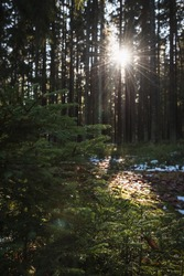 Magical morning sunshine in the forest of czech national park in south bohemian.