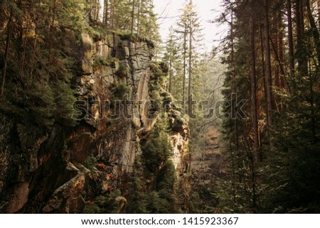 Magical mountain ravine in european pine forest