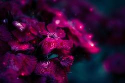 magical purple flowers in night garden
