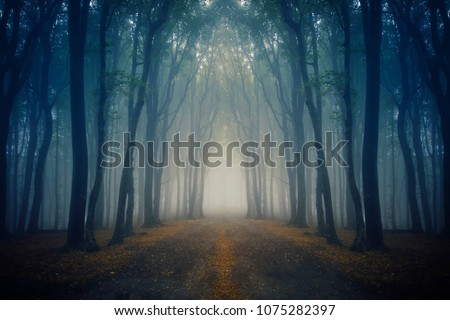magical road in fantasy forest
