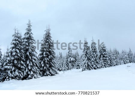 Magical snow covered fir trees in the mountains. Picturesque wintry scene #770821537