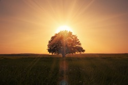 magical sunrise with tree