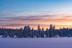 Magical sunset in winter forest