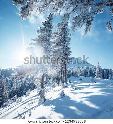 Magical white spruces on a frosty day. Location Carpathian mountain, Ukraine, Europe. Alpine ski resort. Exotic wintry scene. Fabulous winter wallpaper. Happy New Year! Discover the beauty of earth. #1234933558