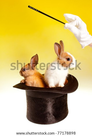 Magician with magic wand with two rabbits in a top hat