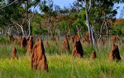 Magnetic Termite Mound in Litchfield National Park, Australia