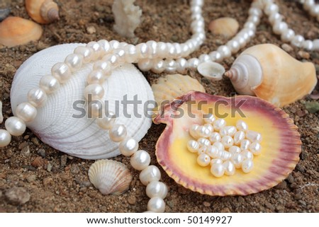 Magnificent background with sea cockleshells and pearls