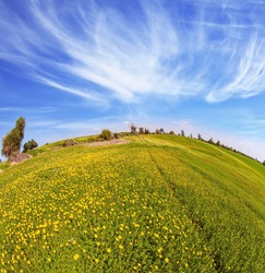 Magnificent blooming spring. Fields of flowers in the bright southern sun. Israel, Negev desert. Triangular flock of migratory birds flying in the blue sky. Photo taken with Fishye lens.