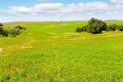 Magnificent blooming spring. Israel in bloom. Blooming Negev Desert in early spring. Early spring green grass carpet in the Negev desert