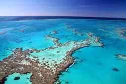 Magnificent colours in the Great Barrier Reef
