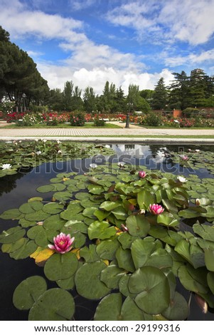 Magnificent garden of roses and lilies in spring Madrid