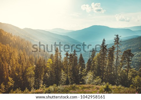 Magnificent panoramic view the coniferous forest on the mighty Carpathians Mountains and beautiful blue sky background. Beauty of wild virgin Ukrainian nature. Peacefulness. #1042958161