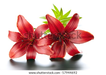 Magnificent red lily