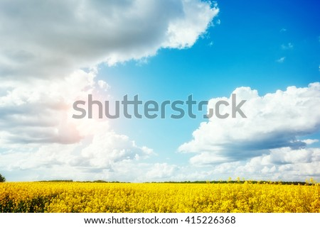 Magnificent views of the endless canola field on a sunny day. White fluffy clouds. Picturesque and gorgeous scene. Location place Ukraine, Europe. Artistic picture. Beauty world.