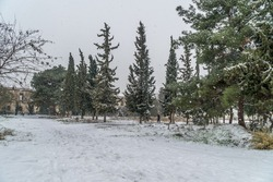 Magnificent winter forest, the road is covered by snow. Winter landscape. White snow covers the ground and trees. Majestic atmosphere. Snow nature. Outdoor shot