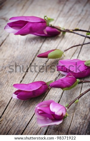 Magnolia Flower on old wooden table
