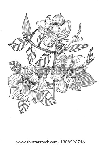 Magnolia. Sketch. Hand drawn. #1308596716