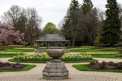 Magnolias and daffodils bloom in the formal rose gardens at Niagara Parks Botanical Gardens.