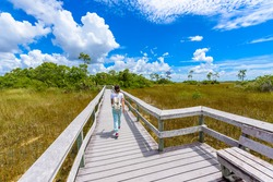 Mahogany Hammock Trail of the Everglades National Park. Boardwalks in the swamp. Florida, USA.
