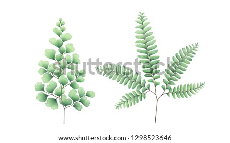 Maidenhair fern set isolated on white background. Watercolor hand drawn illustration.
