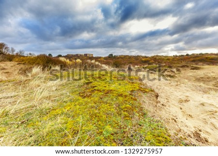 Maidenhair, Polytrichum commune, on coating of sand dune with underlying layers profile of dune development and roots of deep rooting duce races against overcast sky with overcast #1329275957