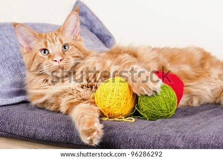 Main Coon cat lying with balls of wool
