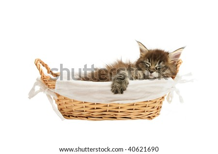 maine coon kitten in basket isolated on white background