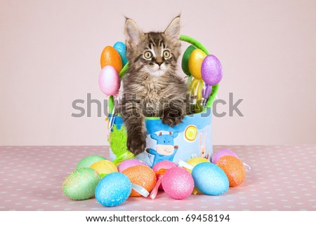 Maine Coon kitten sitting in Easter basket with easter eggs
