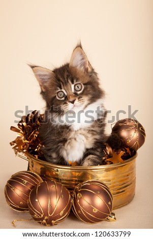 Maine Coon kitten sitting inside copper container with christmas decorations on beige background
