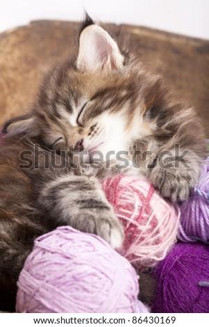 Maine Coon kitten sleeping resting in a basket of balls of yarn