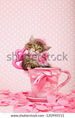 Maine Coon kitten with pink hat sitting inside pink cup with pink ribbon bow and pink hearts and fake rose petals on pink background