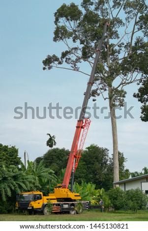 Maintenance of large trees with a large crane. #1445130821