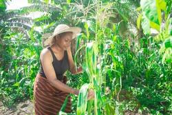 maize plantation in nigeria africa