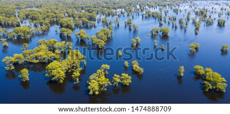Majestic Atchafalaya river and swamp in Louisiana, aerial view Сток-фото ©