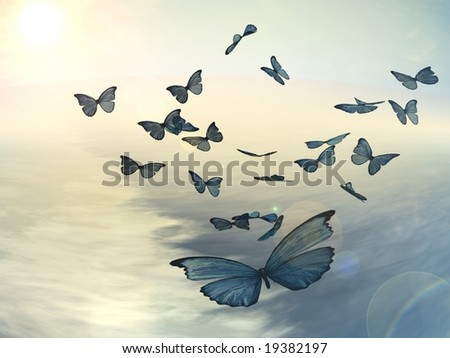 Pictures Of Butterflies Flying. Butterflies Flying Over