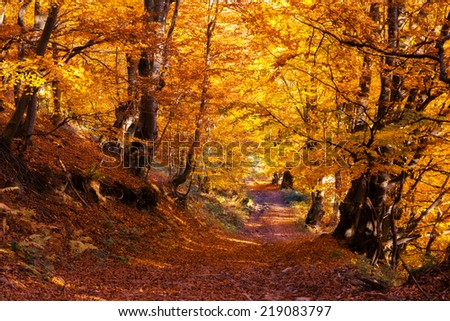 Majestic colorful forest with sunny beams. Natural park. Dramatic morning scene. Red autumn leaves. Carpathians, Ukraine, Europe. Beauty world. #219083797