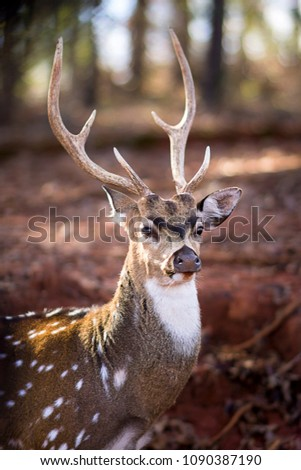Majestic dear with Antlers.  #1090387190