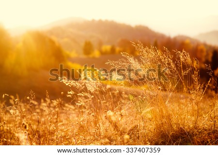 Majestic field in the sunlight. Dramatic and picturesque morning scene. Warm toning effect. Retro and vintage style, soft filter. Carpathians. Ukraine, Europe. Beauty world.