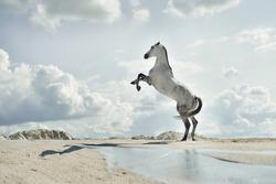 majestic horse, Fabulous scene of the jumping horses