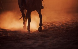 Majestic image of horse silhouette with rider on sunset background.