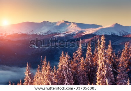 Majestic landscape glowing by sunlight in the morning. Dramatic and picturesque wintry scene. Location Carpathian, Ukraine, Europe. Ski resort. Beauty world. Instagram toning effect. Happy New Year!