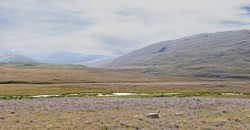 Majestic landscape in the foothills of the Altai Mountains. Endless meadows and fields.