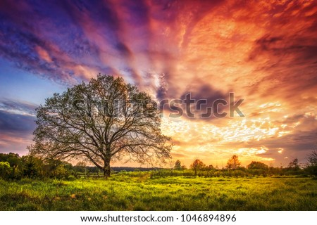 Majestic landscape of bright colorful sunrise over rural meadow with large tree in the spring morning. Beautiful colored cloudy sky on horizon and shining grass from sunlights. Scenery nature. #1046894896