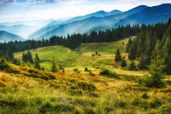 Majestic landscape of summer mountains. A view of the misty slopes of the mountains in the distance. Morning misty coniferous forest hills in fog and rays of sunlight. Travel background.