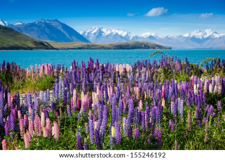 Stock Photo Majestic mountain lake with llupins blooming