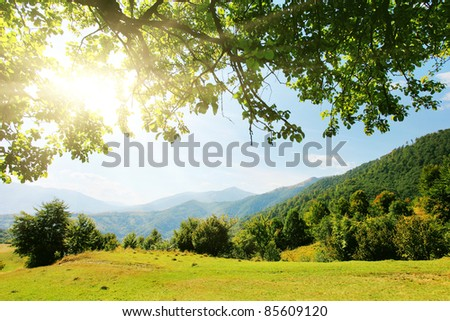 Majestic mountains landscape with fresh green leaves